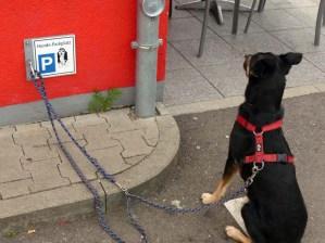 Hundeparkplatz mit ordnungsgemäß geparktem Luis