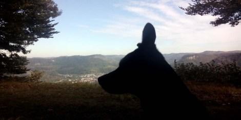 Luis rechtes Ohr lauscht Richtung Albstadt