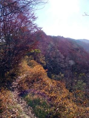 Herbstlicher Albtrauf
