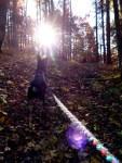 Hochalbpfad-Hossingen-32-Lichtspiel-mit-Hund