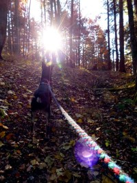 Direkt der Sonne entgegen: Aufstieg zum Baienberg