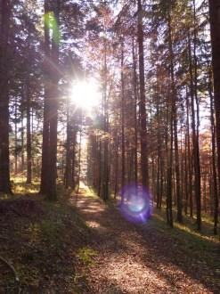 Licht- und Schattenspiele im Wald