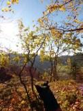 Aussichtspunkt mit Baumsicht