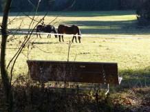 Ruhebank für Pferdefreunde