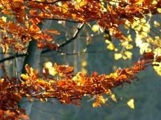 Herbstlaub-Farborgie am Wegesrand