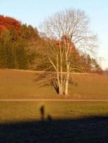 Schattenhund macht Schattensitz