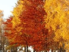 Herbstliche Farborgie direkt am Parkplatz