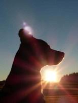 Hund im Abendrot (träumt vom Abendbrot)