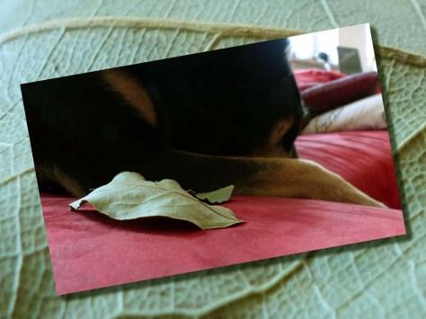 Lorbeer macht schlau: Müde Beine auf fremden Lorbeeren ausruhen