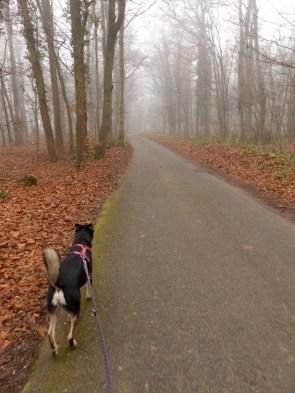 Hund im Wald im Nebel