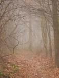 Geheimnisvoller Nebelwald