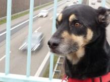 Weniger hektischer Hund über der A8