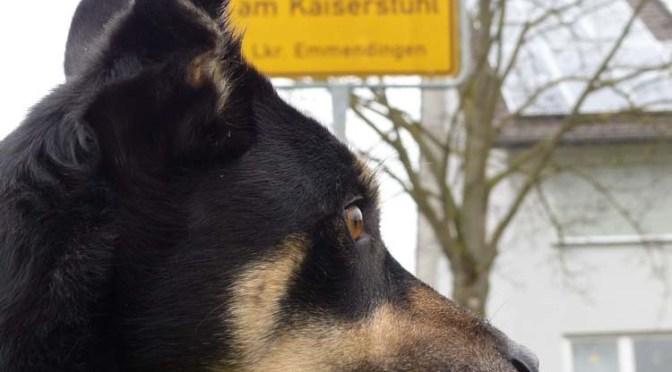 Ba[h]lingen-Tour VII: Endspurt Waldkirch — Bahlingen