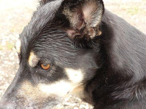 Sieger im Wet Dog Contest