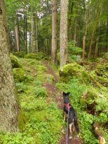 Felsenmeer mit Hund