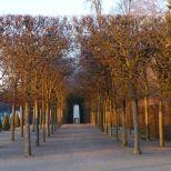 schlosspark-schwetzingen-wintermorgen-002