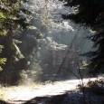 balingen-hangen-fruehling-10