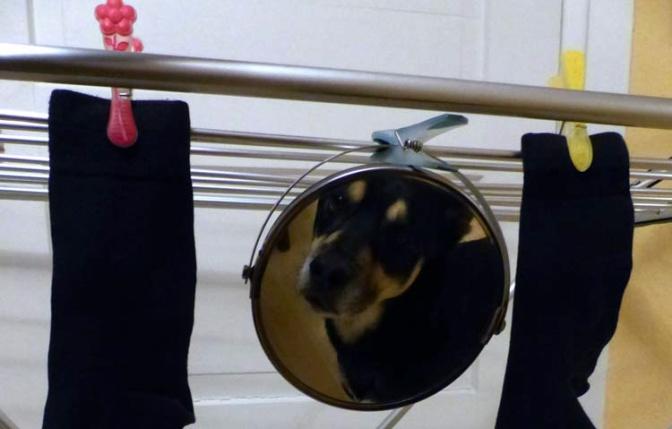 Symbolfotos sind dem Spiegel Wurst