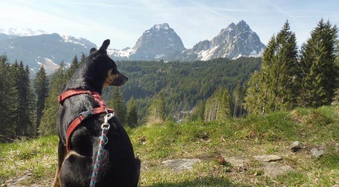 Via Jacobi mit Hund 5: Einsiedeln — Brunnen