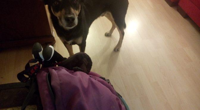 Via Jacobi mit Hund: Letzte Vorbereitungen