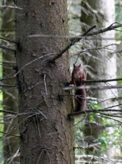 Killer-Eichhörnchen?