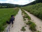Luis (noch) auf dem Hohenzollernweg