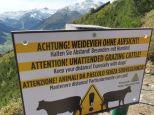 Alpenuberquerung-Fügen-Hohenfügen-48