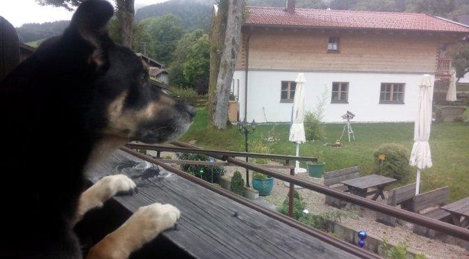 Alpenüberquerung mit Hund: Die Anreise
