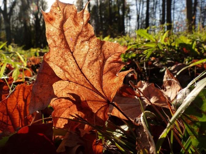 Balingen: Herbst, Hund & Heuberg