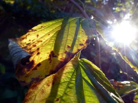 Balingen-Heuberg-Herbst-10