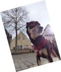 Noerdlingen-Ries-mit-Hund_06
