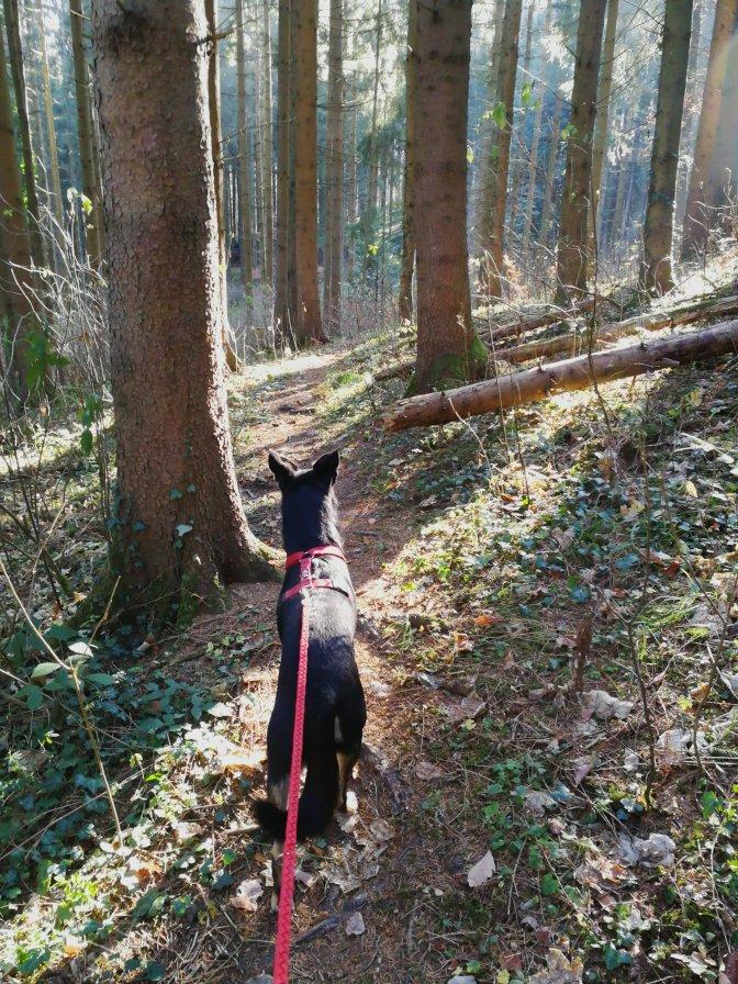 Zickzack 3: Bisingen — Irgendwo im Wald