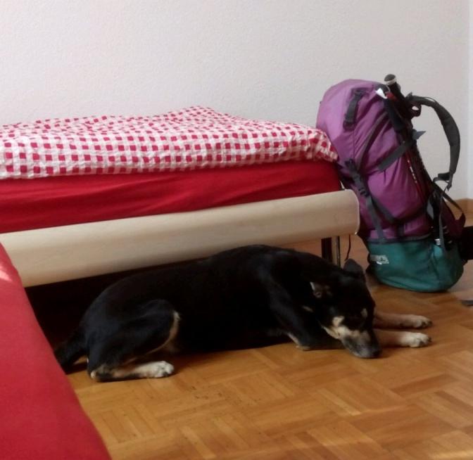 Via Jacobi 2019: Übernachtungen (mit Hund)