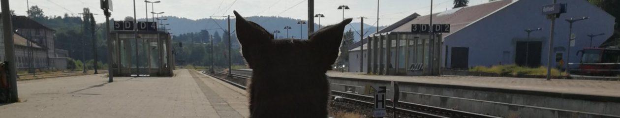 Luis@L&R: Unterwegs mit Hund