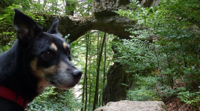 Altmühltal mit Hund 1: Panoramaweg Kinding – Unteremmendorf